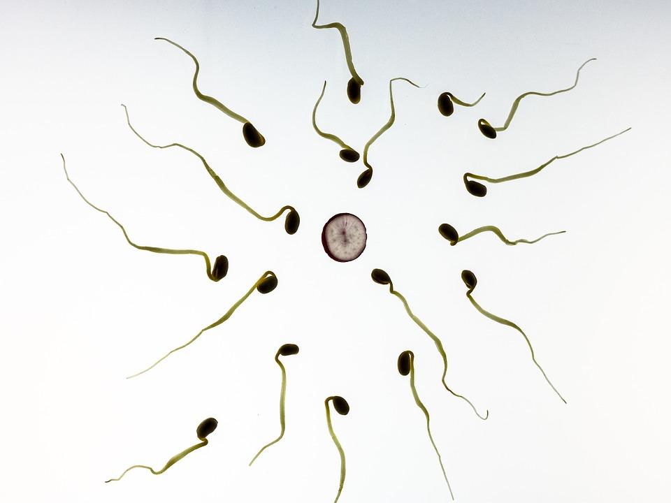 Spermistlerin avantajları