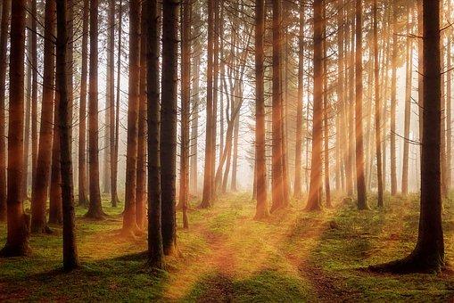 Güneş Kremi Zararlı Işınlardan Korur